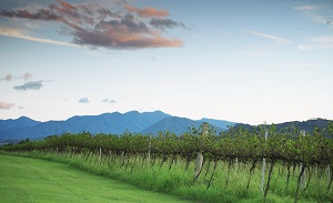 Explore Queensland's Best Wine Regions