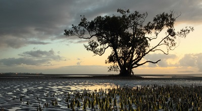 Nudgee beach