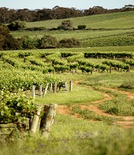 Clare valley wine