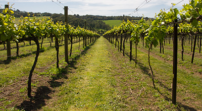 Wine-Tour-Mornington.jpg